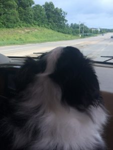 Sophie helping out with the navigation - the dogs LOVE the huge window.