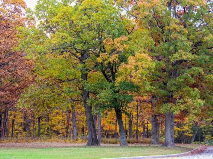 Busse Woods, Elk Grove Village IL