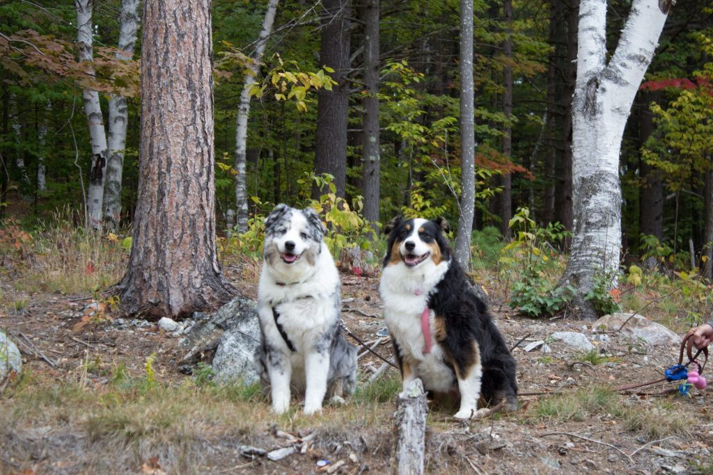 Smokey and Sophie at North Pole Resorts Campground - Wilmington New York